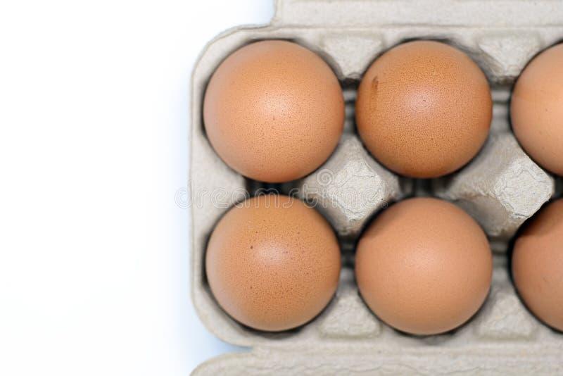 Eieren in kartondoos stock foto
