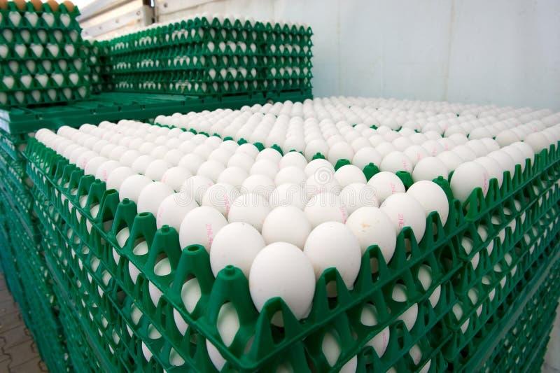 Eieren in kratten royalty-vrije stock afbeeldingen