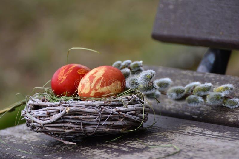 Eieren in mand stock foto
