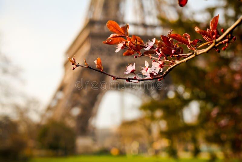 Download Eiffel стоковое изображение. изображение насчитывающей развилки - 33734089