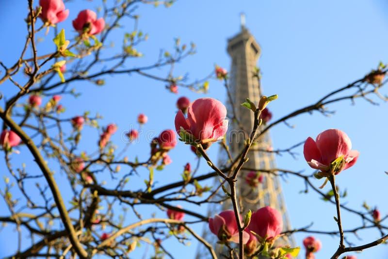eiffel France Paris wiosna czas wierza fotografia royalty free