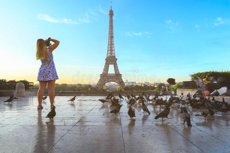 Eiffel tower with pigeons flying around royalty free stock image