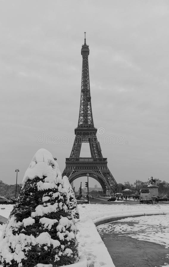 Eiffel tower and pine tree under the snow in winter - Paris stock image