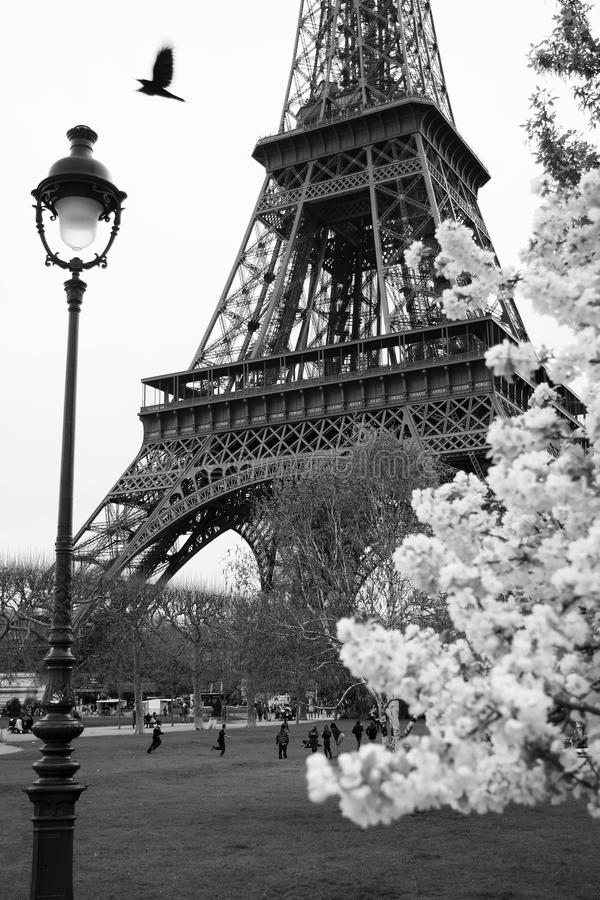 Download Eiffel Tower With Spring Park, Paris, France Stock Image - Image: 19232009