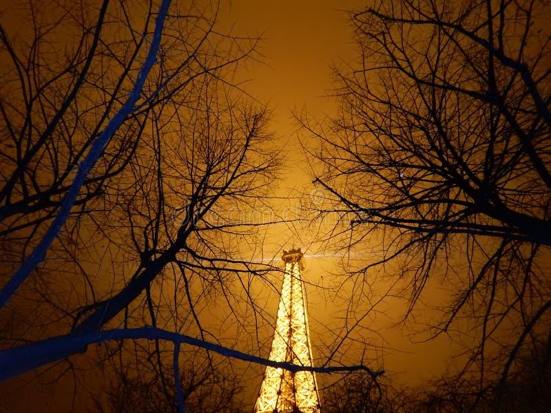 Eiffeltorn iluminated på natten Till och med filialerna royaltyfri foto