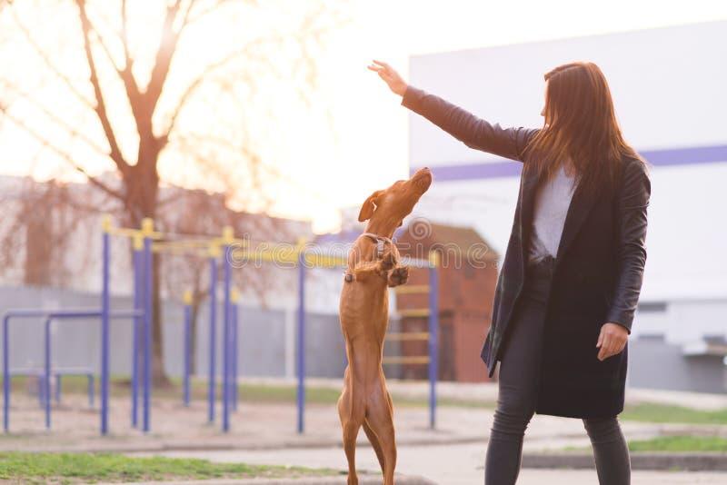 eigenaarspelen met een hond op de straat op de achtergrond van de zonsondergang Het gelijk maken van gangen met een hond De huisd stock foto's