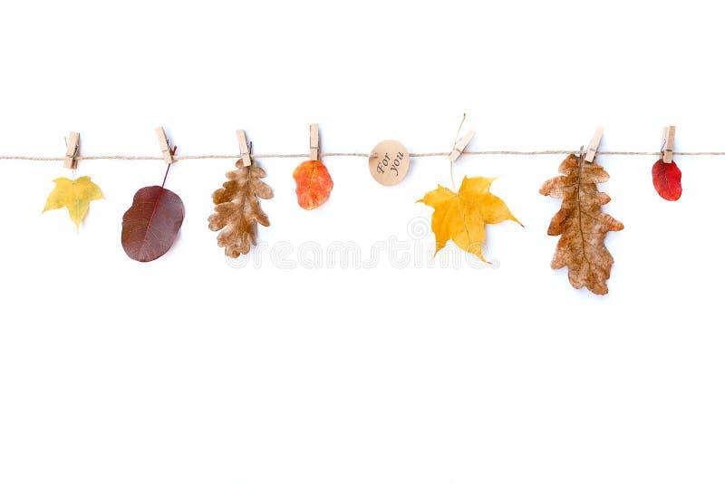Eigener weißer Hintergrund Herbstblätter und Inschriften für Sie Flachbildschirm, obere Ansicht, Kopierraum stockfotografie