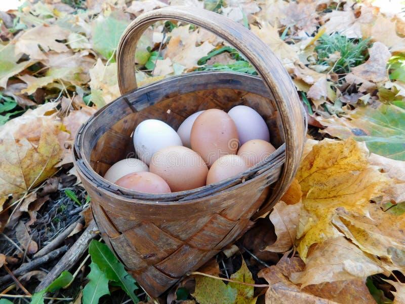 Eigengemaakte eieren royalty-vrije stock foto's