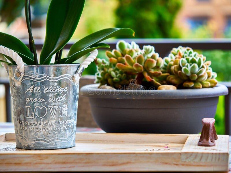 Eigengemaakte pot met liefdebericht en cactus op de achtergrond stock afbeelding