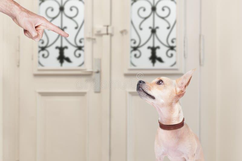 Eigentümer, der seinen Hund bestraft lizenzfreie stockfotos