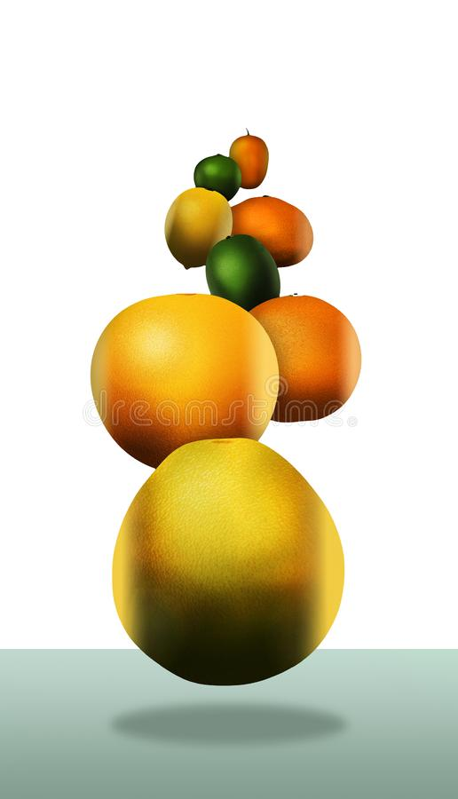 Eight popular citrus fruits are pictured. These include: pomelo vector illustration