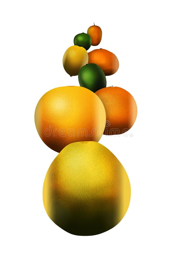 Eight popular citrus fruits are pictured. These include: pomelo stock illustration