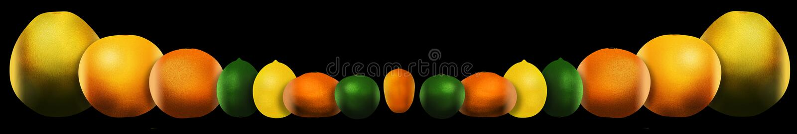 Eight popular citrus fruits are pictured. These include: pomelo. Grapefruit, orange, lime, lemon, tangerine, key lime and kumquat. This is an illustration royalty free illustration