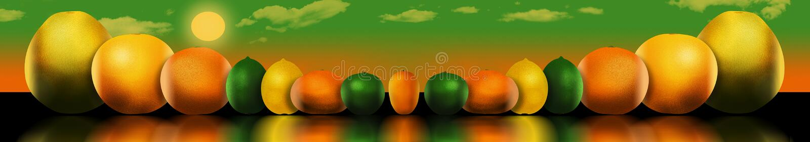 Eight popular citrus fruits are pictured. These include: pomelo. Grapefruit, orange, lime, lemon, tangerine, key lime and kumquat. This is an illustration stock illustration