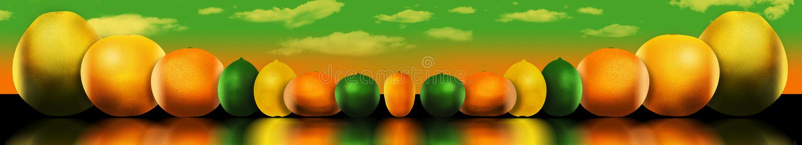 Eight popular citrus fruits are pictured. These include: pomelo. Grapefruit, orange, lime, lemon, tangerine, key lime and kumquat. This is an illustration vector illustration