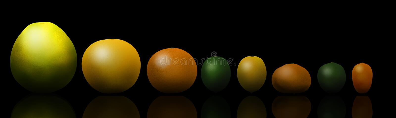 Eight popular citrus fruits are pictured left to right: pomelo, grapefruit, orange, lime, lemon, tangerine, key lime and kumquat stock illustration