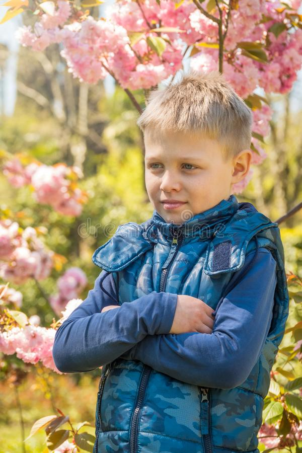 An eight-year-old boy stands among the blooming Sakura in the rays of sunset royalty free stock photo
