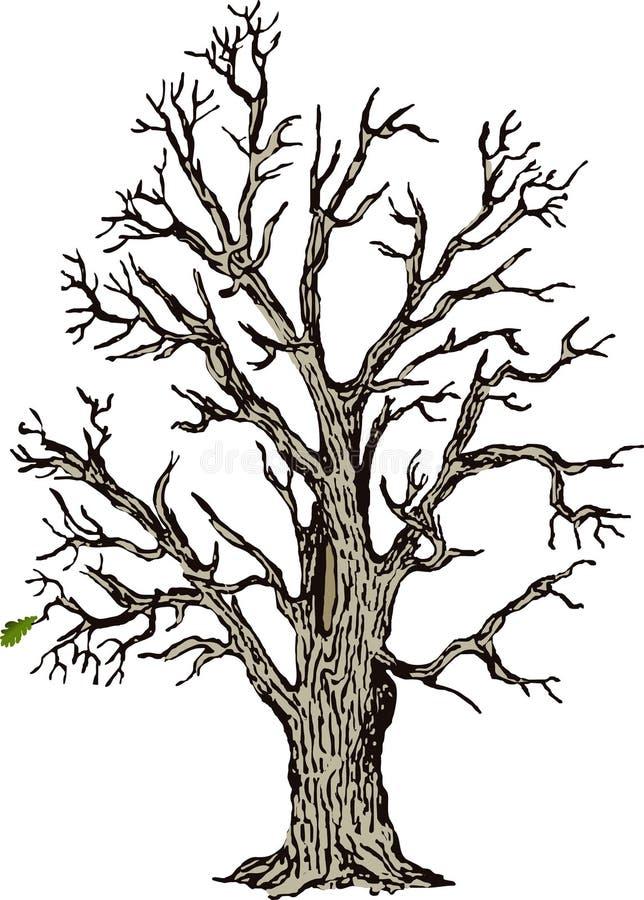 Download Eik vector illustratie. Illustratie bestaande uit installaties - 280240