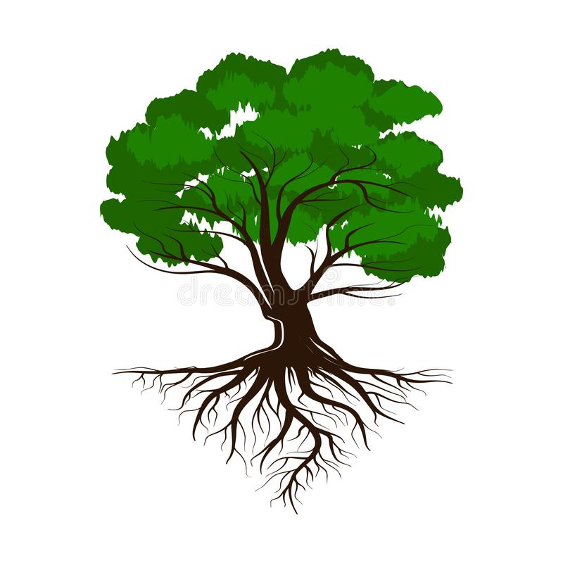 Eik een groene het levensboom met wortels en bladeren Vectordieillustratiepictogram op witte achtergrond wordt geïsoleerd vector illustratie
