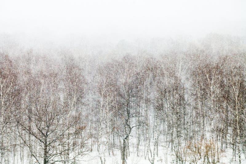 Eik en berkbomen in sneeuwblizzard royalty-vrije stock fotografie