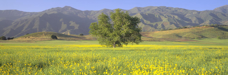 Eik en mosterd op groen gebied royalty-vrije stock fotografie