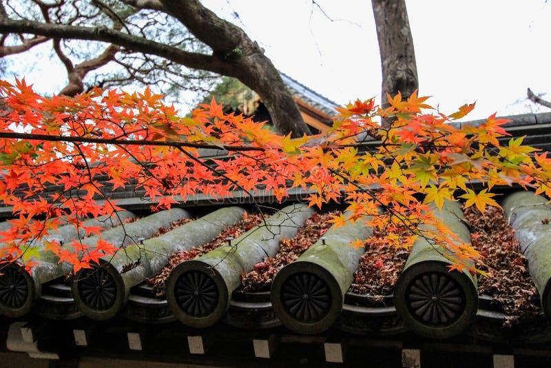 Eikando tempel (Zenrin-ji) i höst royaltyfri fotografi