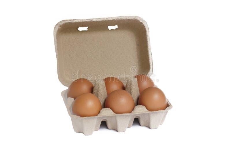 Eikasten mit sechs braunen Eiern lizenzfreies stockbild