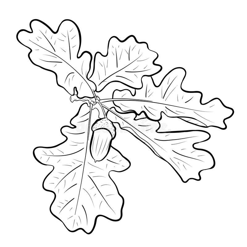 Eikel vector illustratie