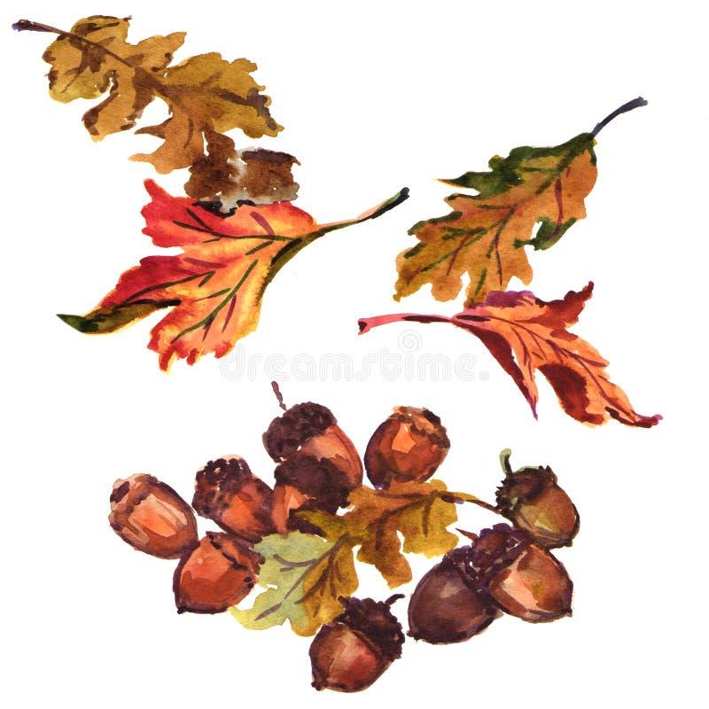 Eikel met eiken geïsoleerde bladeren stock illustratie