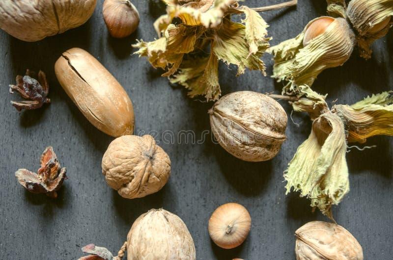 Eikels, noten, hazelnoten met droge peduncle op zwarte achtergrond royalty-vrije stock afbeeldingen