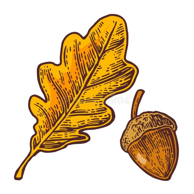 Eiken blad en eikel Vectorkleurenwijnoogst gegraveerde illustratie royalty-vrije illustratie