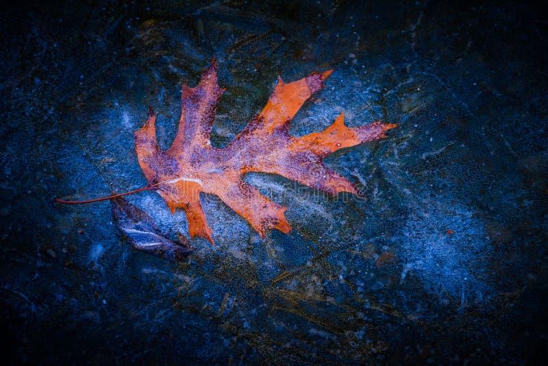 Eiken blad in het ijs royalty-vrije stock afbeeldingen