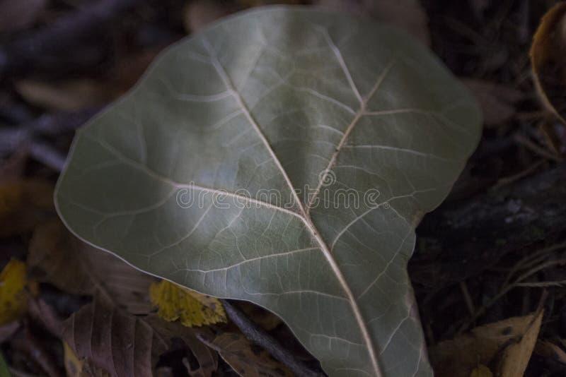 Eiken blad, rustig langzaam verdwenen in de recente zomer royalty-vrije stock afbeeldingen
