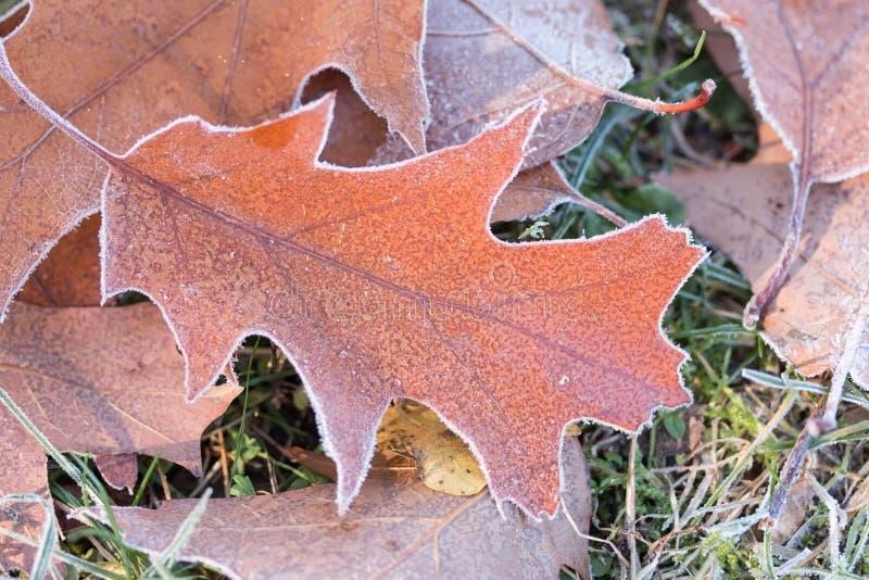 Eiken bladeren met diamantstof royalty-vrije stock foto's