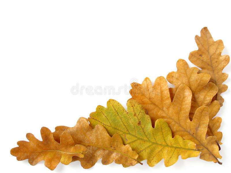 Eiken bladerenhoek stock fotografie