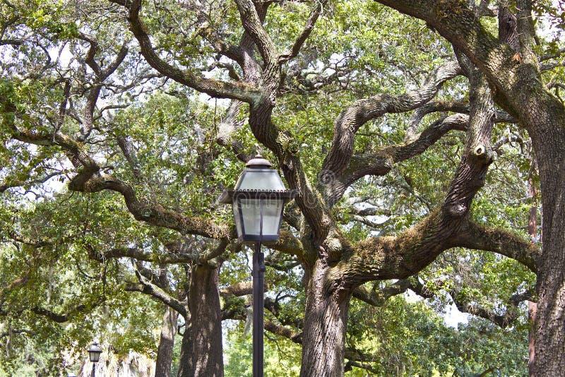 Eiken bomen royalty-vrije stock foto