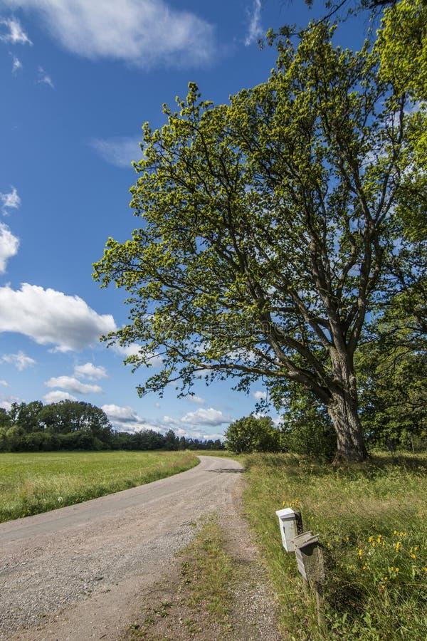 Eiken boom bij weide stock foto's