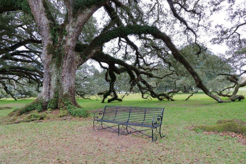 Eiken boom en een stoel in New Orleans, Louisiane royalty-vrije stock afbeelding