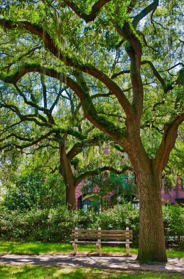 Eiken boom met mos in Savanne royalty-vrije stock foto's