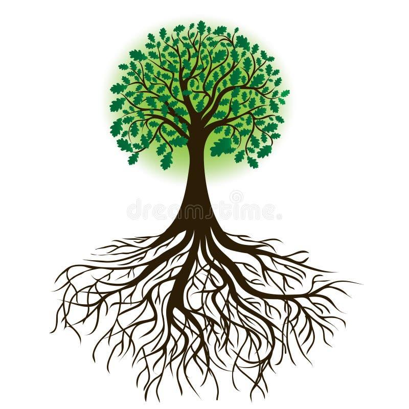 Eiken boom met wortels en dicht gebladerte, vector vector illustratie