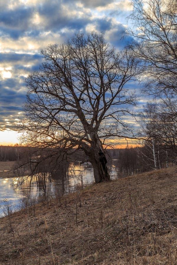 Eiken boom op de bank van de rivier royalty-vrije stock fotografie
