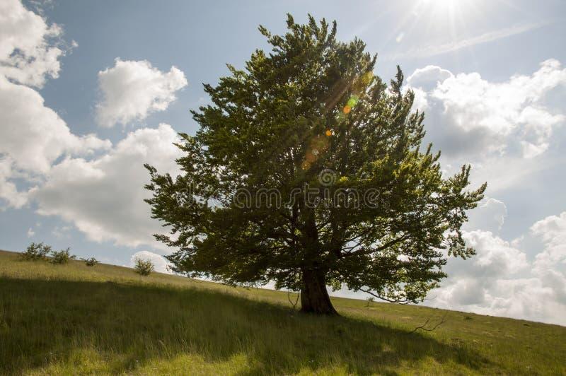 eiken boom op een heuvel royalty-vrije stock afbeeldingen