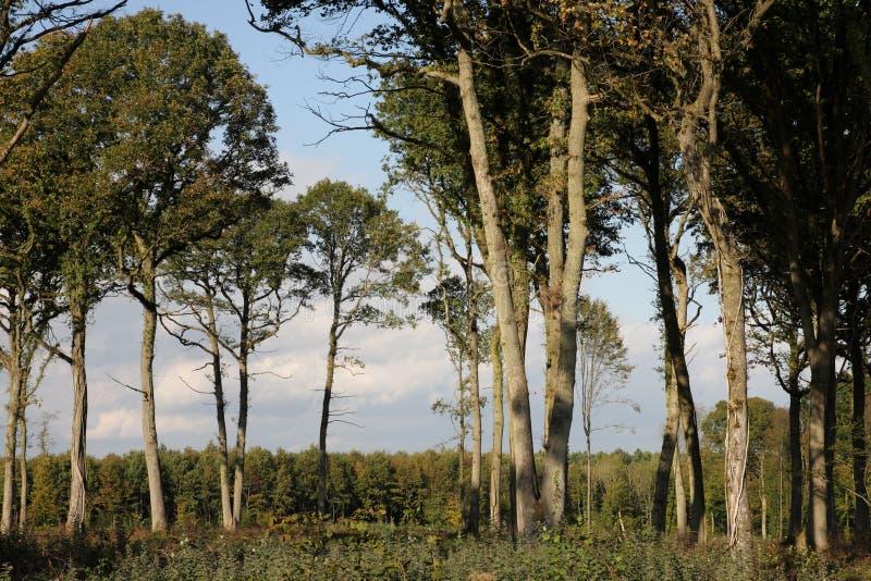 Eiken bos in Frankrijk royalty-vrije stock fotografie