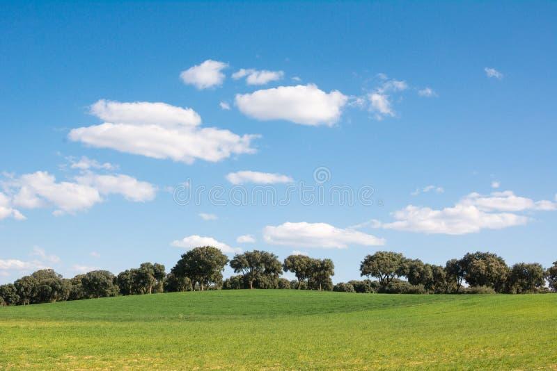 Eiken bosje op een groen grasgebied, onder een blauwe hemel Het behang van Nice stock foto's