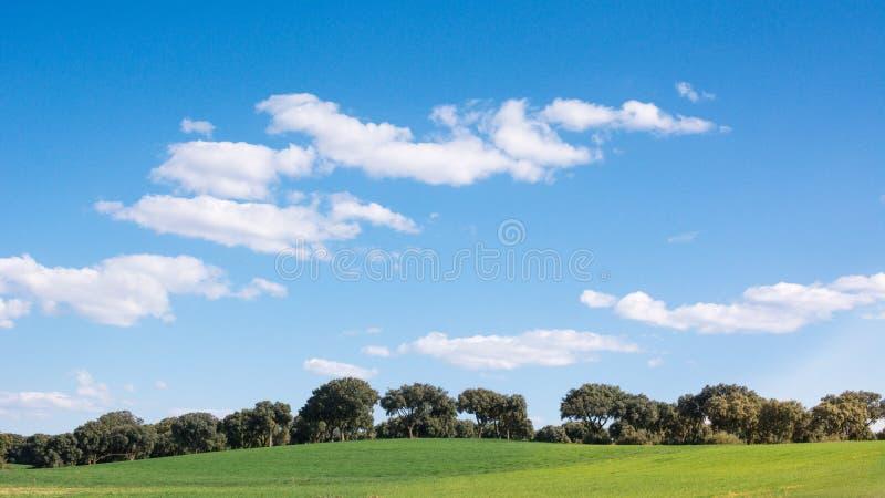 Eiken bosje op een groen grasgebied, onder een blauwe hemel Peacefulllandschap royalty-vrije stock foto's
