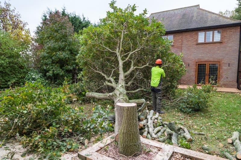 Eiken die boom in een tuin wordt verminderd stock fotografie