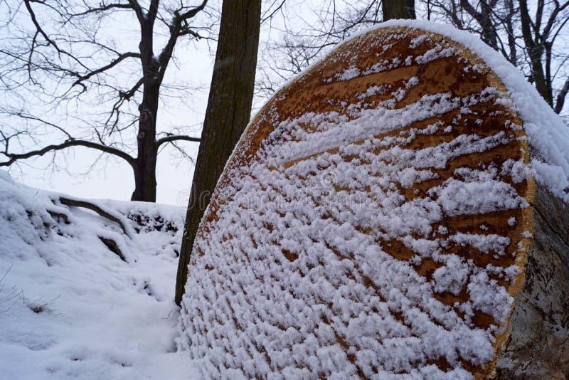 Eiken hout op de dam royalty-vrije stock afbeelding