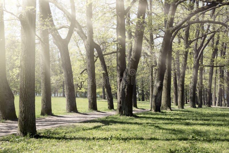 Eiken weg, schaduwen van de zon en stralen door takken royalty-vrije stock afbeelding