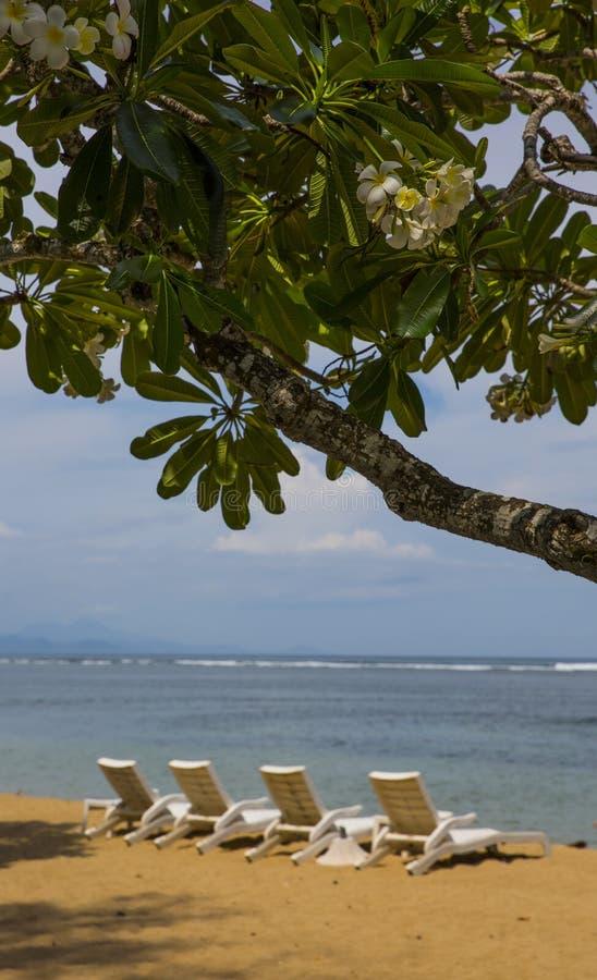 Eiland Bali Tropisch bloemen en strand royalty-vrije stock fotografie