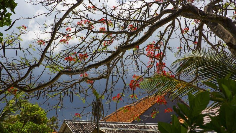 Eiland Bali Tropische Bloemen royalty-vrije stock foto